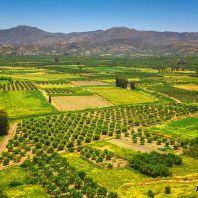 Остров Крит: сельскохозяйственные угодья