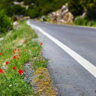 Природа острова Крит: полевые маки