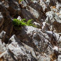 Разнообразие природы острова Крит: дикая коза кри-кри
