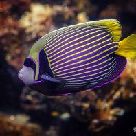 CretAquarium - морской аквариум Крита