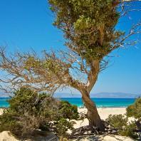 Остров Хриси: белый песок и ливанский кедр
