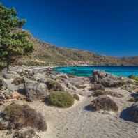 Можжевельники по дороге на пляж Кедродасос, Крит