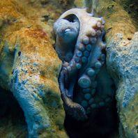crete_naturРазнообразие природы острова Крит: осьминогe_4_03_heraklion_ru