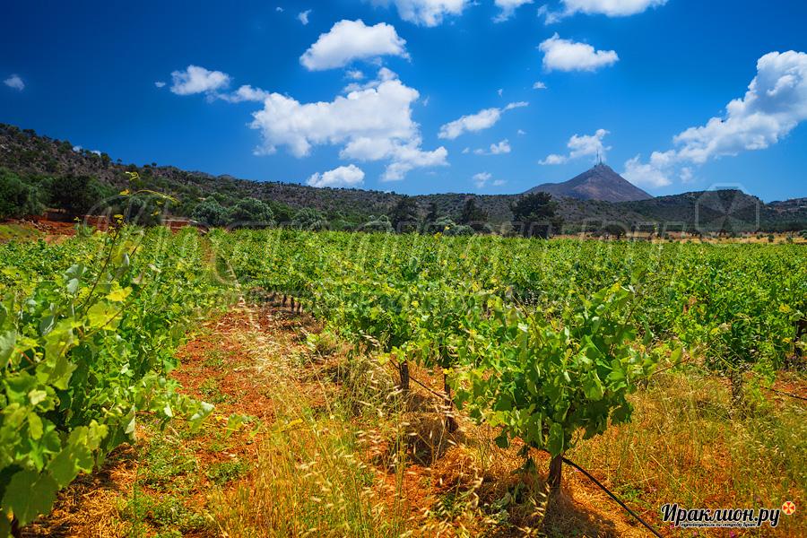 Как землю в остров Агиа Триада