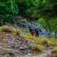 В ущелье Имброс, остров Крит, Греция