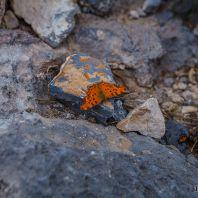 Бабочки в ущелье Курталиотико