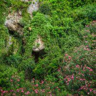 Флора Курталиотского ущелья