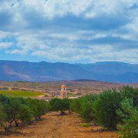 Оливковые рощи монастыря Топлу, Крит, Греция