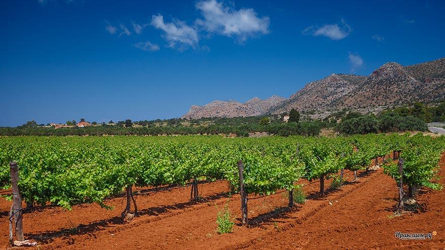 Виноградники монастыря Агиа Триада, Крит, Греция